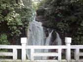 2010-2-26 陽明山花季:DSC01447.JPG