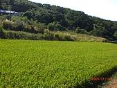 2009-11-10挑鹽古道:CIMG4894.JPG
