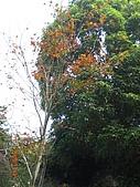 馬拉邦山98.12.8:CIMG5486.JPG