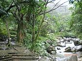 2009-11-17草嶺古道:CIMG4948.JPG