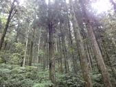 20110705東眼山:DSC03882.JPG