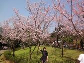 2010-2-26 陽明山花季:DSC01453.JPG