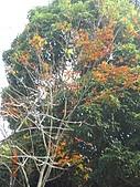 馬拉邦山98.12.8:CIMG5487.JPG