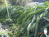 2009-11-10挑鹽古道:CIMG4896.JPG