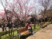 2010-2-26 陽明山花季:DSC01465.JPG