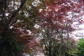 20130614-16太平山_拉拉山:P1020143.JPG