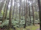20110705東眼山:DSC03886.JPG