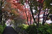 20130614-16太平山_拉拉山:P1020144.JPG