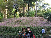 11/1~6日本自助六日探險:CIMG0134