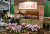 2012-12-29花博:DSC00901.JPG