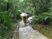 2009-11-17草嶺古道:CIMG4952.JPG