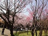 2010-2-26 陽明山花季:DSC01463.JPG