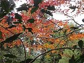 2010-1.5竹東五指山共26人:DSC00616.JPG