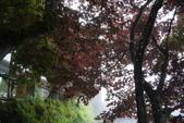 20130614-16太平山_拉拉山:P1020153.JPG