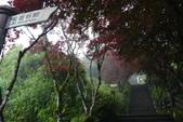 20130614-16太平山_拉拉山:P1020154.JPG