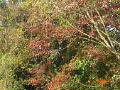 馬拉邦山98.12.8:CIMG5568.JPG