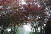 20130614-16太平山_拉拉山:P1020163.JPG