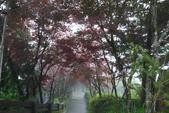 20130614-16太平山_拉拉山:P1020164.JPG