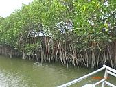 四草生態坐船遊紅樹林好多魚往船上跳台南新化兩日遊981123:CIMG4597.JPG