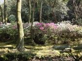 2010-2-26 陽明山花季:DSC01452.JPG