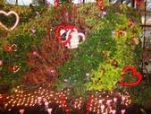 2012-02宜蘭風爭小木屋伯朗蘭花園礁溪武暖餐廳冬山河騎三輪車:DSC05397.JPG