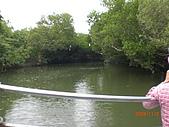 四草生態坐船遊紅樹林好多魚往船上跳台南新化兩日遊981123:CIMG4600.JPG