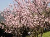 2010-2-26 陽明山花季:DSC01461.JPG