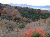 20151217-21 靜岡東京五日:DSC07006 (800x600).jpg