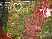 2012-02宜蘭風爭小木屋伯朗蘭花園礁溪武暖餐廳冬山河騎三輪車:DSC05400.JPG