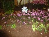 2012-02宜蘭風爭小木屋伯朗蘭花園礁溪武暖餐廳冬山河騎三輪車:DSC05401.JPG