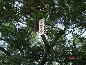 四草生態坐船遊紅樹林好多魚往船上跳台南新化兩日遊981123:CIMG4603.JPG