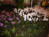 2012-02宜蘭風爭小木屋伯朗蘭花園礁溪武暖餐廳冬山河騎三輪車:DSC05402.JPG