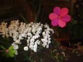 2012-02宜蘭風爭小木屋伯朗蘭花園礁溪武暖餐廳冬山河騎三輪車:DSC05403.JPG