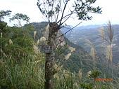 馬拉邦山98.12.8:CIMG5498.JPG