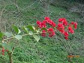 馬拉邦山98.12.8:CIMG5579.JPG
