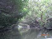 四草生態坐船遊紅樹林好多魚往船上跳台南新化兩日遊981123:CIMG4604.JPG