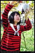 彰化旅遊:20120127彰化大村峻茂葡萄觀光果園1