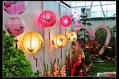 彰化旅遊:20120126彰化溪州公園-花在彰化館內篇6
