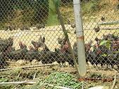 風火輪旅程:20090221苓蘭農園4