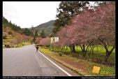 台中旅遊:20111220武陵農場賞楓18