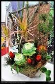 彰化旅遊:20120126彰化溪州公園-花在彰化館內篇7