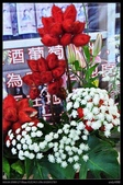 彰化旅遊:20120126彰化溪州公園-花在彰化館內篇12
