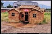 苗栗旅遊:20121120銅鑼杭菊1