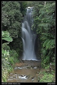 基隆旅遊:20100221七堵泰安瀑布1