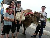 彰化旅遊:20080707彰化芳苑牛車踩踏-2