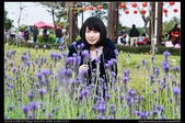 彰化旅遊:20120126彰化溪州公園-花在彰化苗圃區4