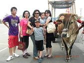 彰化旅遊:20080707彰化芳苑牛車踩踏-1