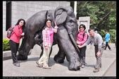 登山健行:20130309三義慈濟茶園7