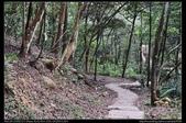 登山健行:20130309三義慈濟茶園5