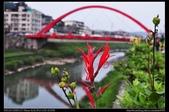 基隆旅遊:20120404七堵基隆河杜鵑花堤道13